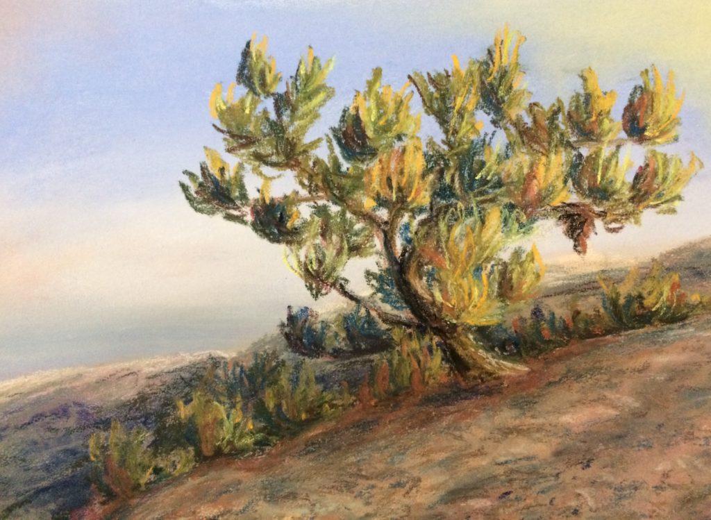 Shawanagunk Pine - 6 x 8 in - pastel on paper (Oct 2017)