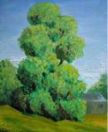 Trees, landscape