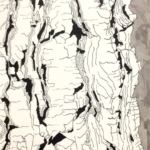 White Pine Bark - 10x8 inches - ink on  paper - 2018