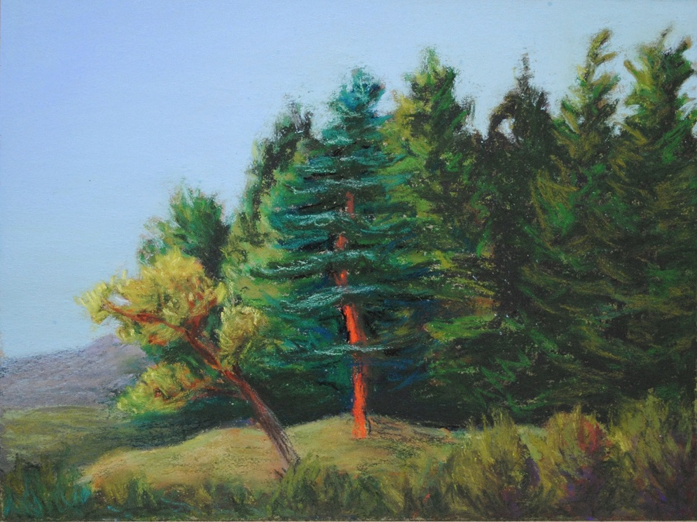 Barking up the wrong tree, pastel on paper, 6x8 inches (March 2019)