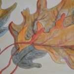 Autumn Oak Leaves. 5x7 inches. ink, natural dyes on paper